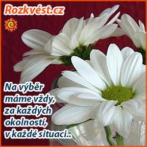 rozkvest001