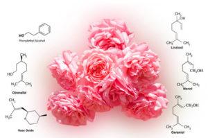 Mini kurz aromaterapie - hlavní složky esenicálních olejů