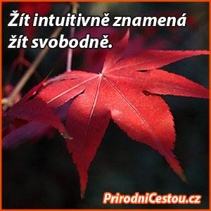 inspirace-pc